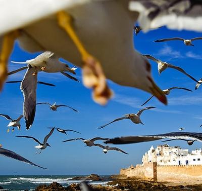 Photo Excursion Essaouira départ de Marrakech