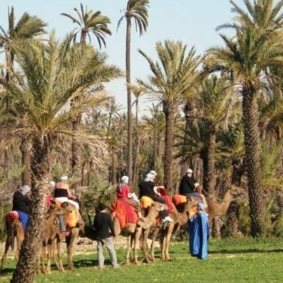 Photo Balade insolite à dos de chameau à Marrakech