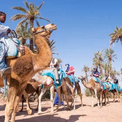 Photo Désert et palmeraie de Marrakech à dos de chameau