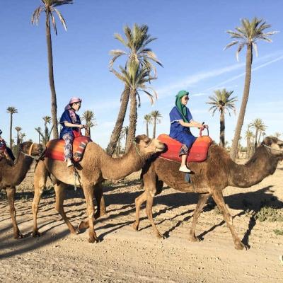 Photo Palmeraie de Marrakech: coucher de soleil à dos de chameau